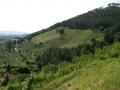 Collina in Versilia