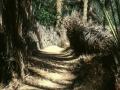 Passaggi nel palmeto