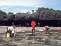 Raccolta di alghe