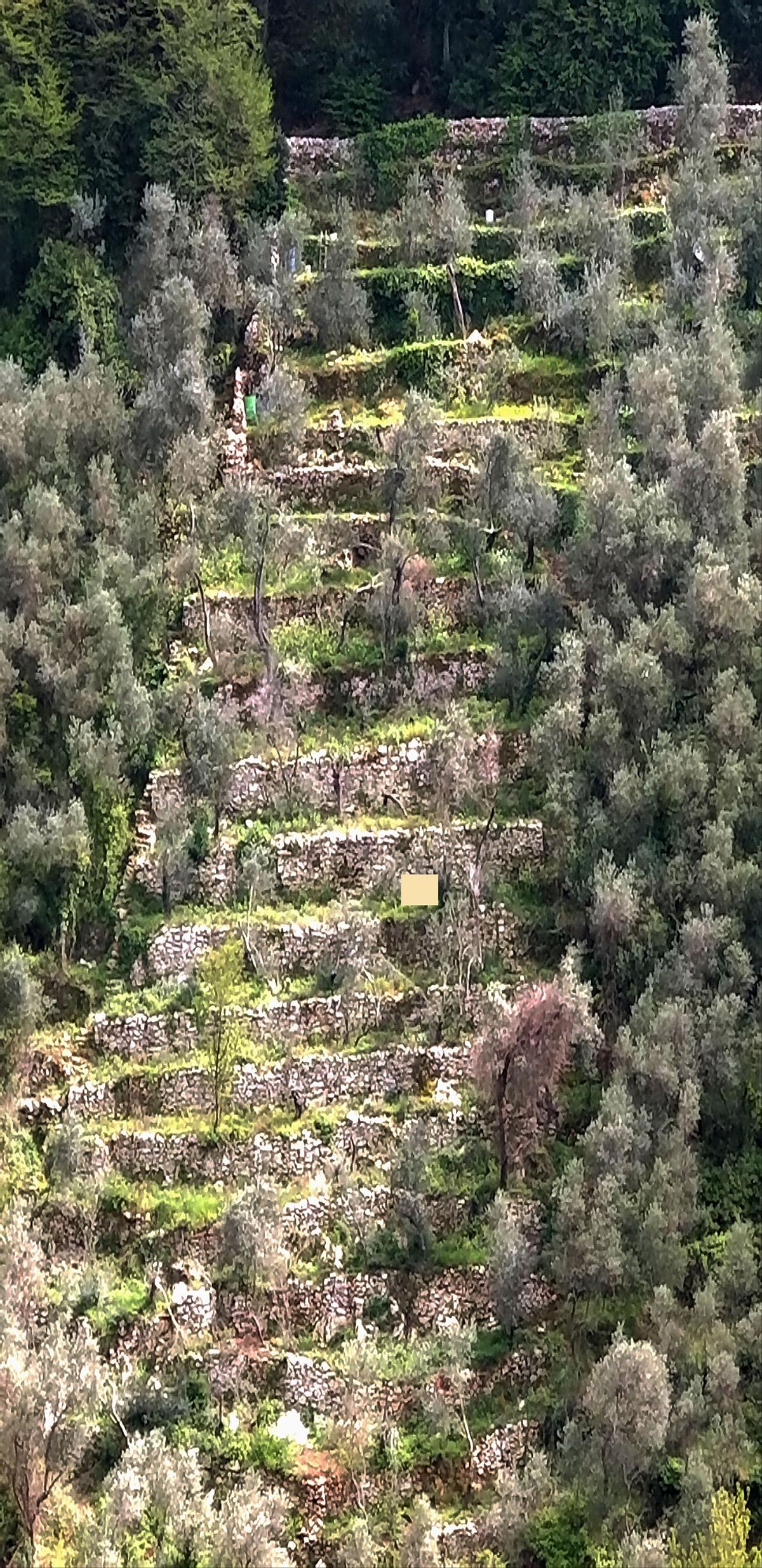 Monte Marcello - Particolare di terrazzamento in pietra