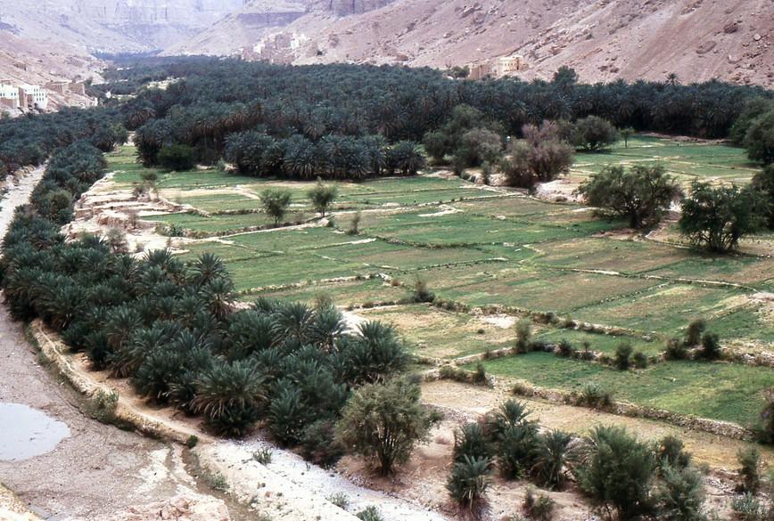 Coltivazioni nello wadi