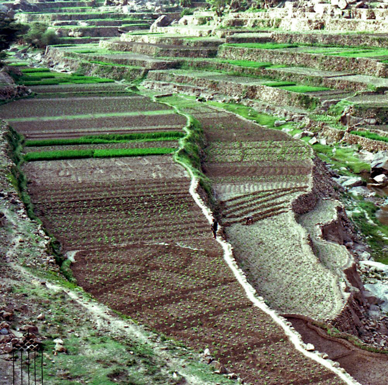 Wady Gazwa, Yemen del Nord - Particolare di terrazzamenti con il sistema marbid