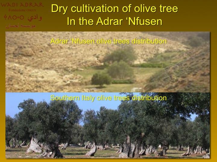 Foto gentilmente concesse da Wadi Adrar Fondazione O.N.L.U.S.