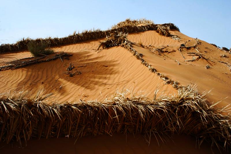 Dune artificiali : i cordoni di foglie di palma si snodano come nastri nel deserto