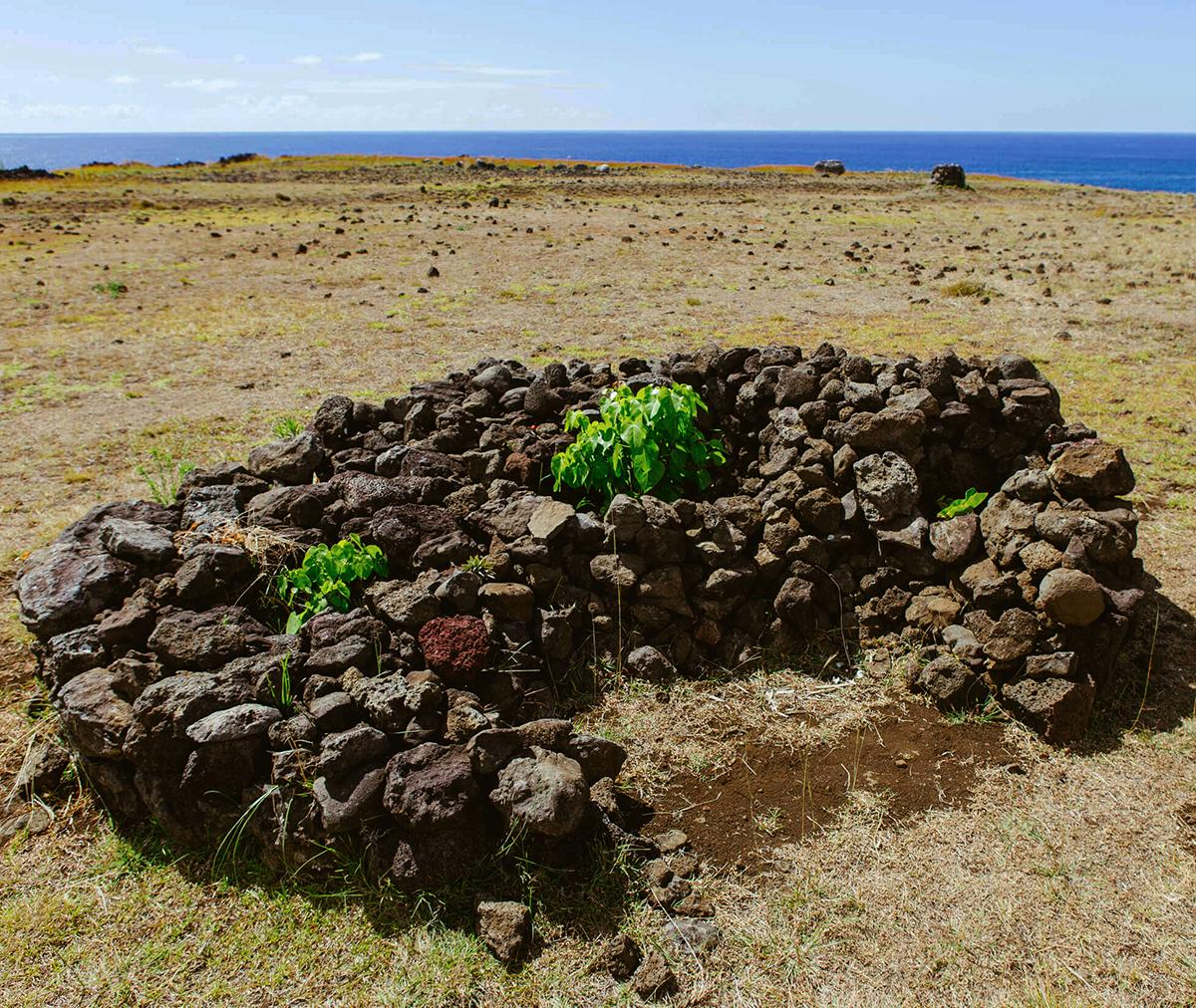Isola di Pasqua, coltivazioni protette nelle conche di pietra lavica