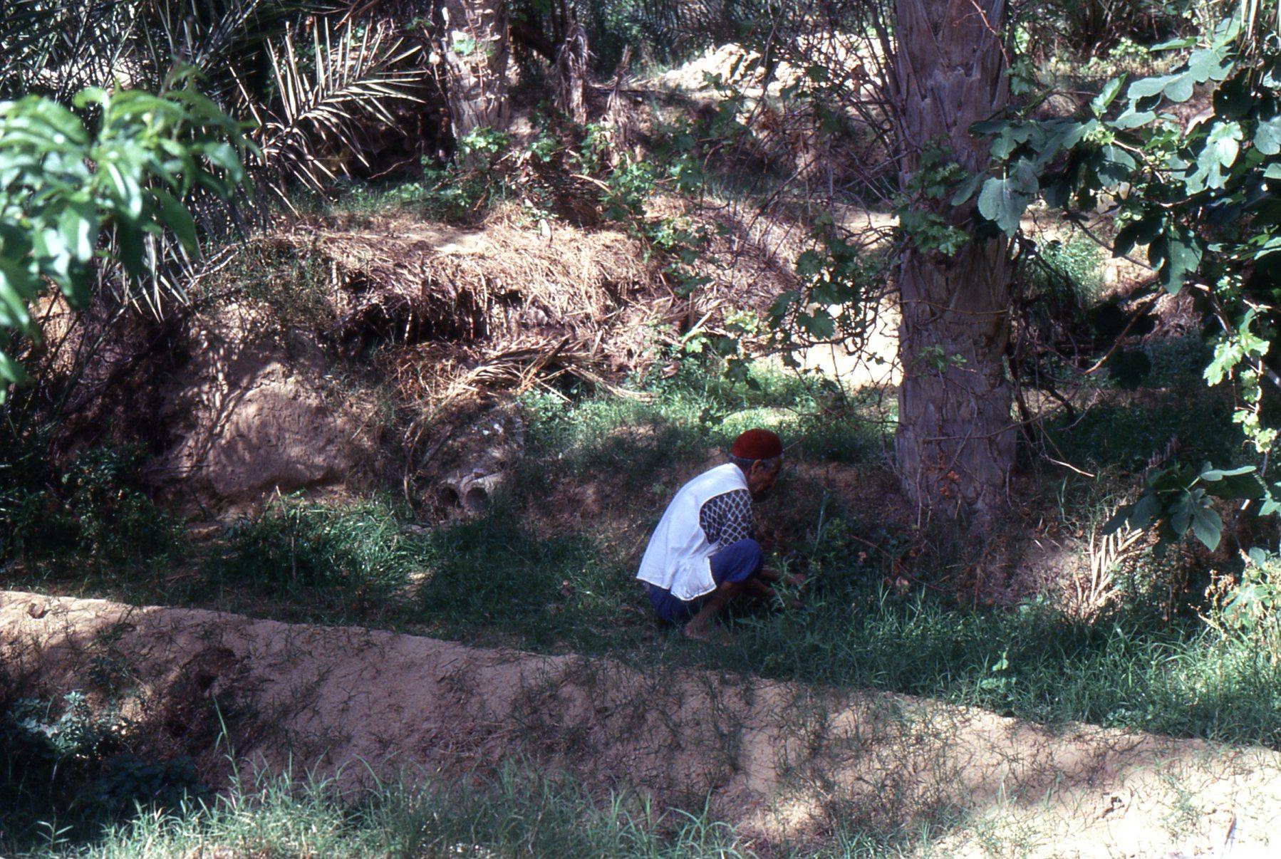 Nell'oasi, l'acqua viene raccolta in bacini di stoccaggio e utilizzata dall'agricoltore per l'irrigazione delle singole parcelle di terreno