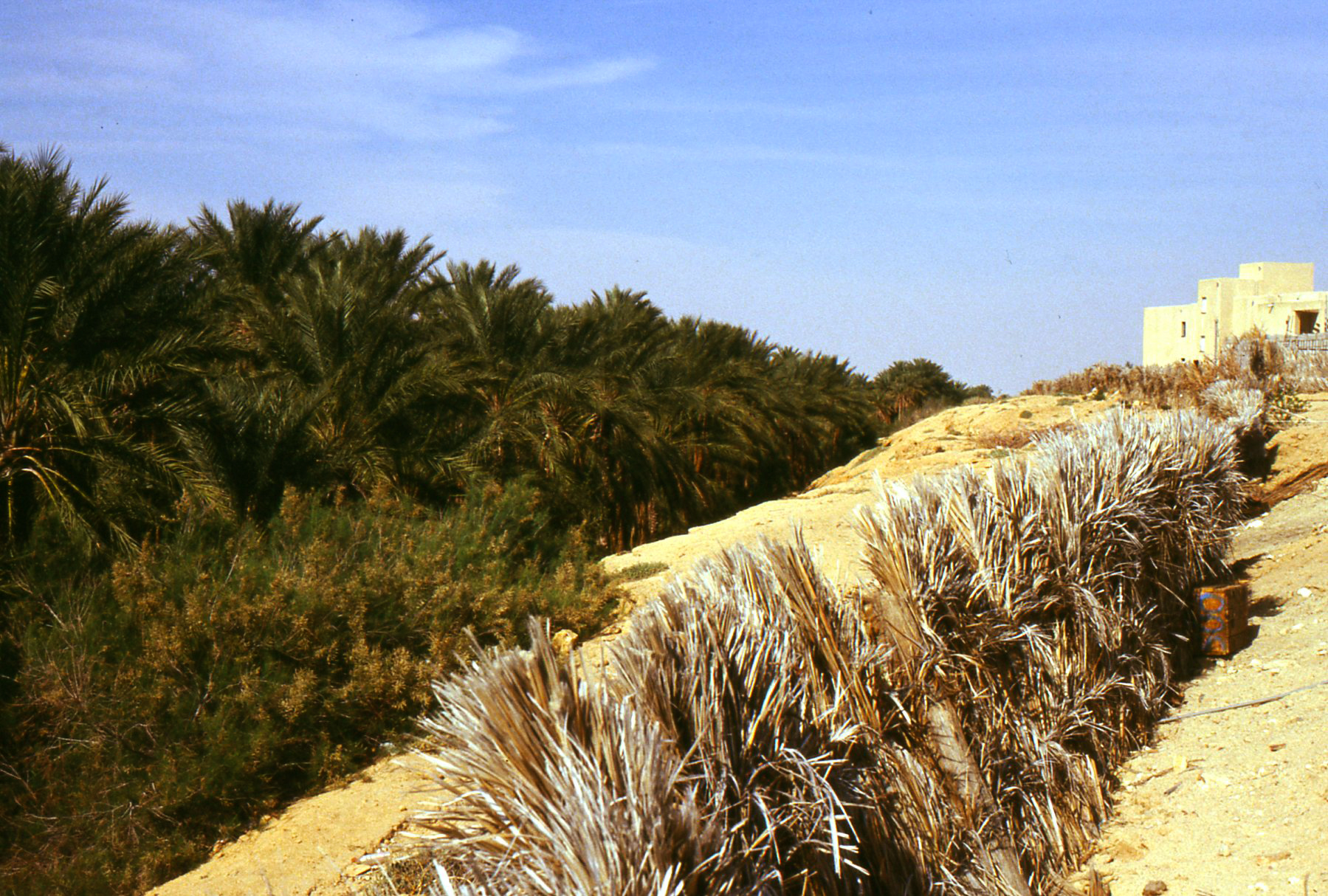 Il grande palmeto è protetto dalla lunga barriera artificiale fatta di rami di palme
