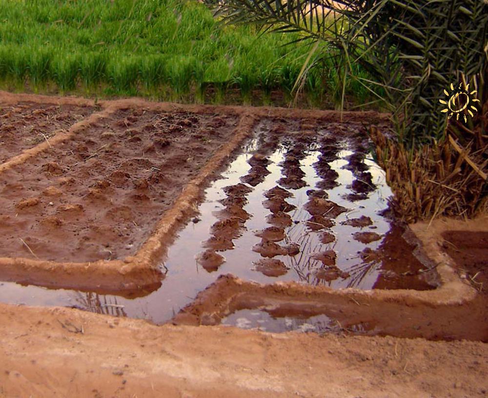 L'acqua raccolta nei bacini di stoccaggio viene utilizzata dall'agricoltore per l'irrigazione delle singole parcelle di terreno