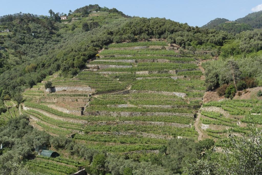 Pangea – Agricoltura – Agriculture