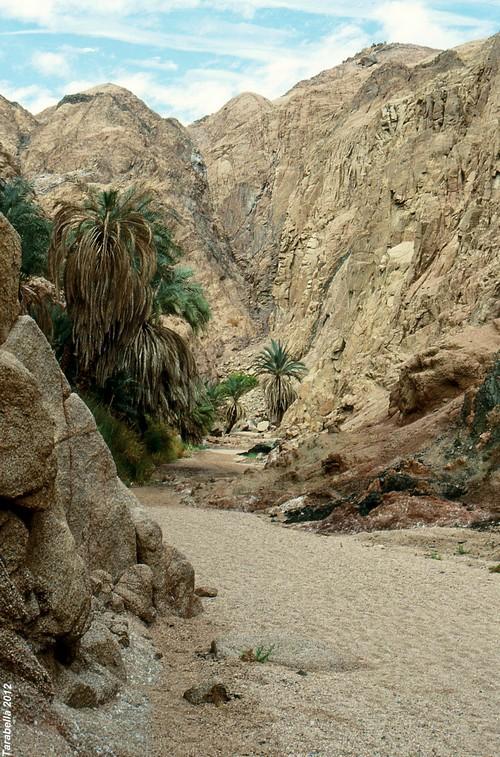 Wadi strada per Nuweiba'a