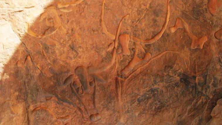 Bassorilievo di bubali nei pressi di Djanet
