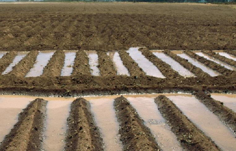 Eritrea - Un sistema d'irrigazione nella valle di Gindah. La zona, situata tra la costa e l'altopiano, riceve l'umidità delle correnti termiche che salgono dal Mar Rosso