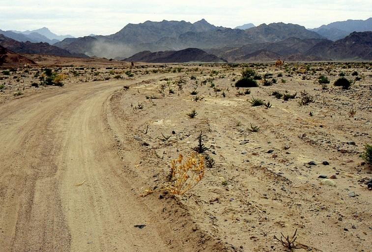 La microvegetazione del deserto, distrutta dal passaggio di veicoli, difficilmente può ricostituirsi