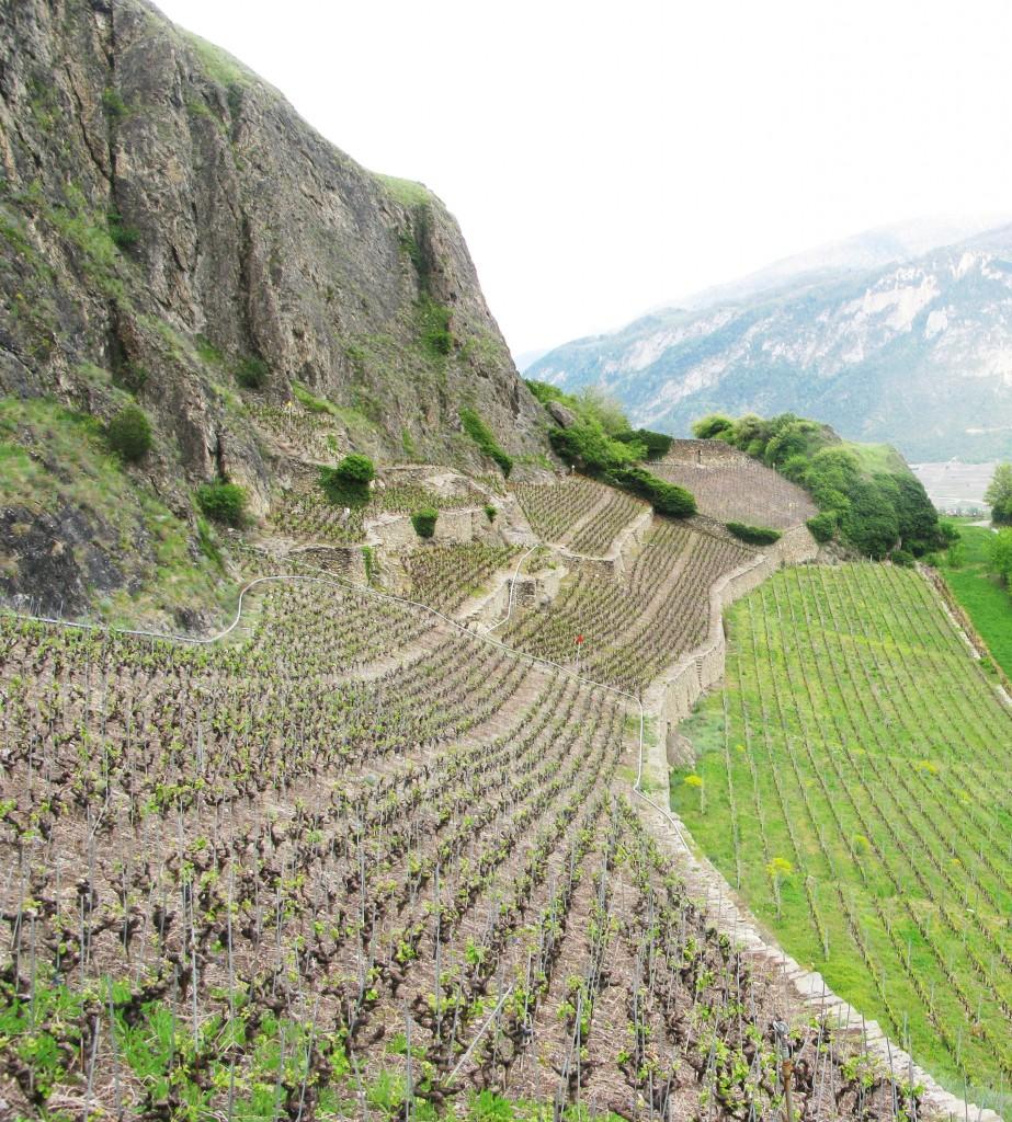 Vigneti terrazzati a Sion