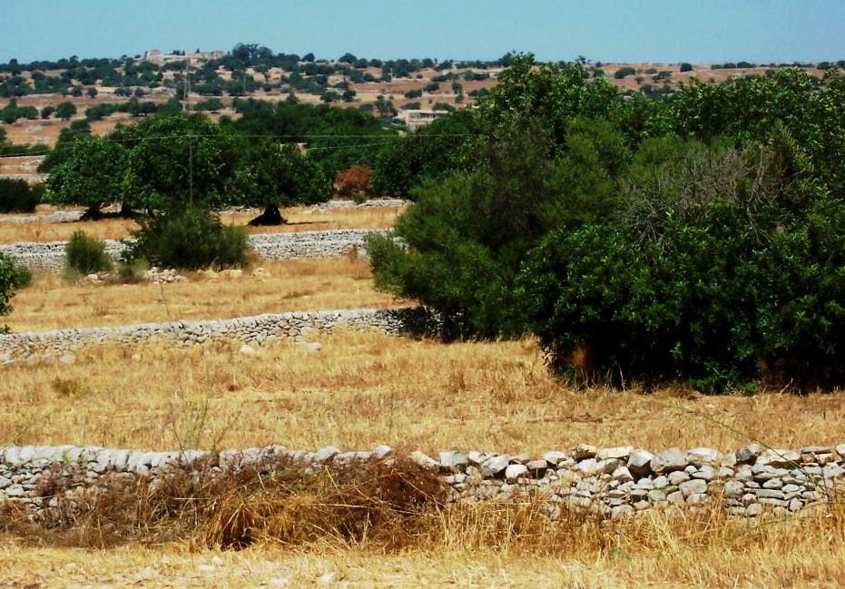 Spagna - Muri a secco chiamati ''tanka''