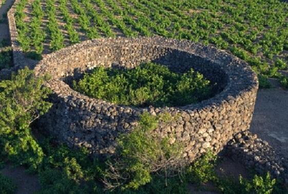 Giardino pantesco (Isola di Pantelleria - Sicilia)