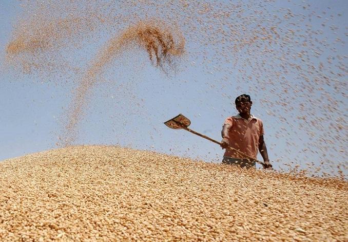 Lavorazione del grano