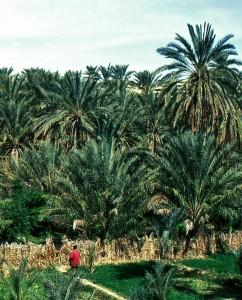 I giardini dell'oasi