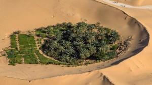 Nell'ambiente contrastante l'uomo crea condizioni favorevoli alla vita, progettando le coltivazioni nelle conche dunari artificiali