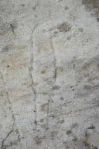Petroglyph - curved blade ''pennato''