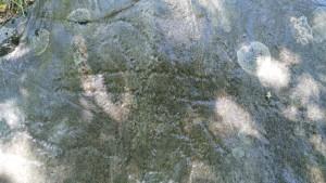 Puntato - Crosses ''pennati''