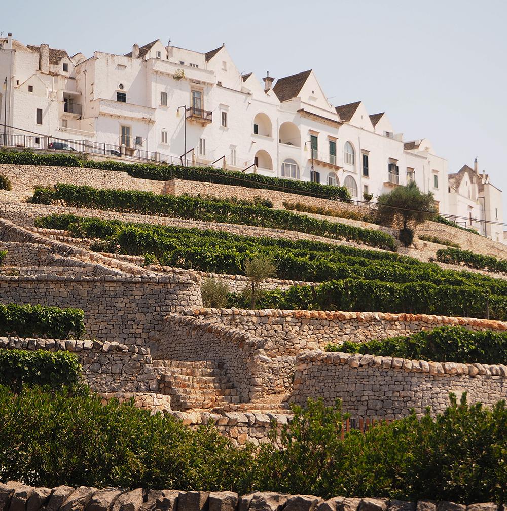 Locorotondo (Apulia) The terraces cultivated with vines