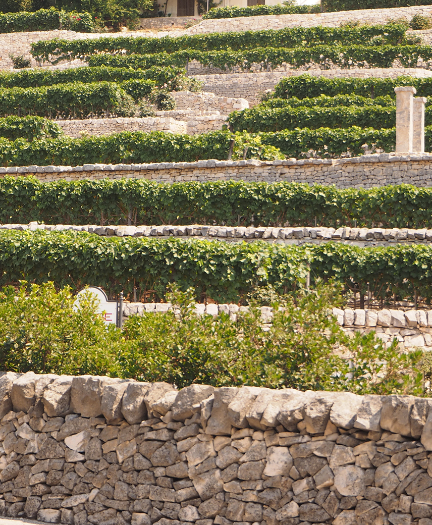 Locorotondo (Apulia) Detail of stone terraces cultivated with vines