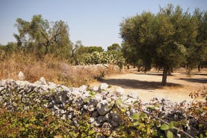 Salento (Apulia) Stone dry walls