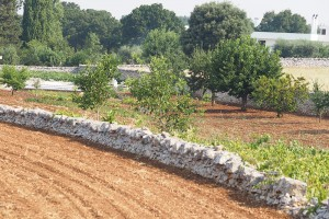 Alberobello (Apulia) Dry stone walls, typical of southern Italy, which border the crops